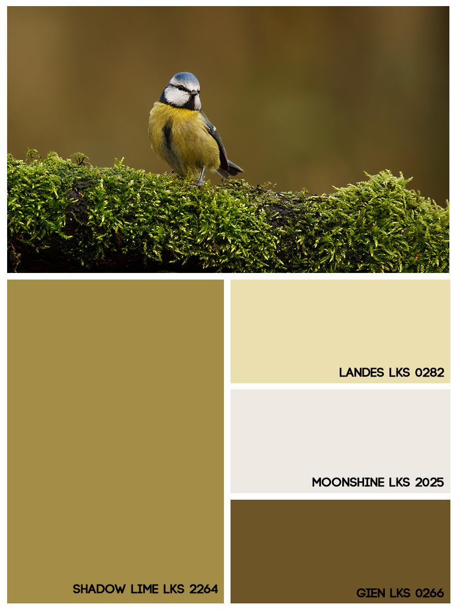 Mosaico 25/01 a 31/01